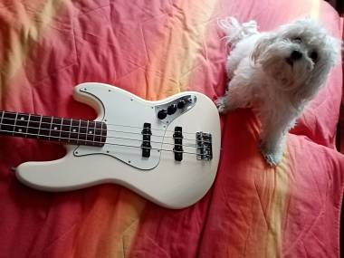 Fender jazz bass con  pickups fender vintage 74